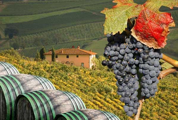 Wine Tasting Lowest Price
