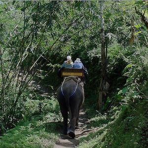 El Bali Elephant Camp