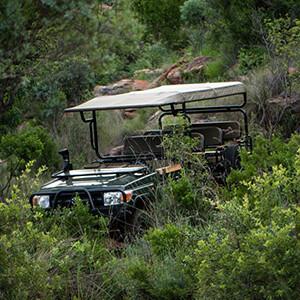 Big 5 Safari Experience